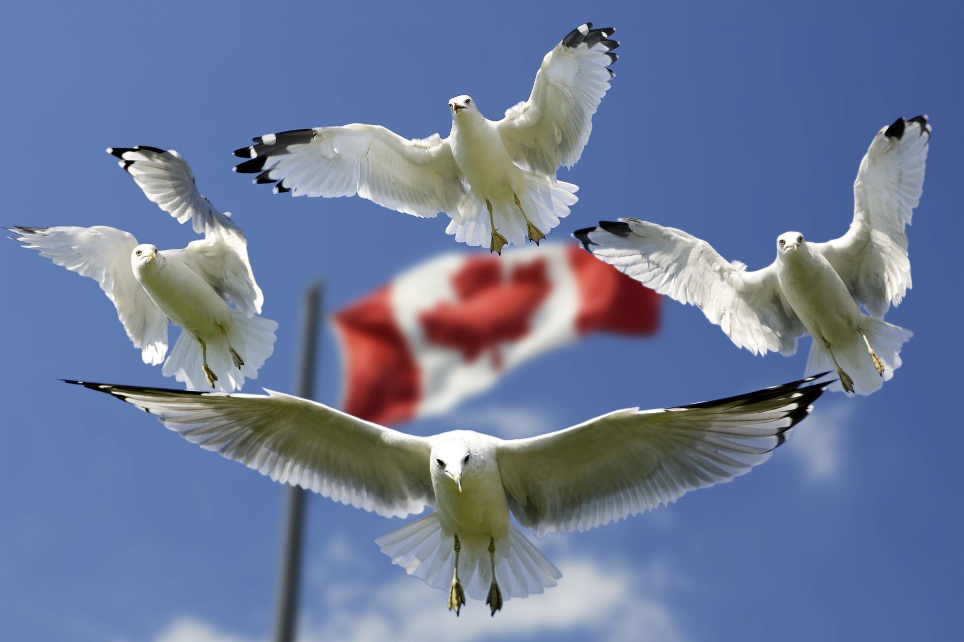 Viaje a Canadá , objetivos viajeros 2017 - Los viajes de Margalliver